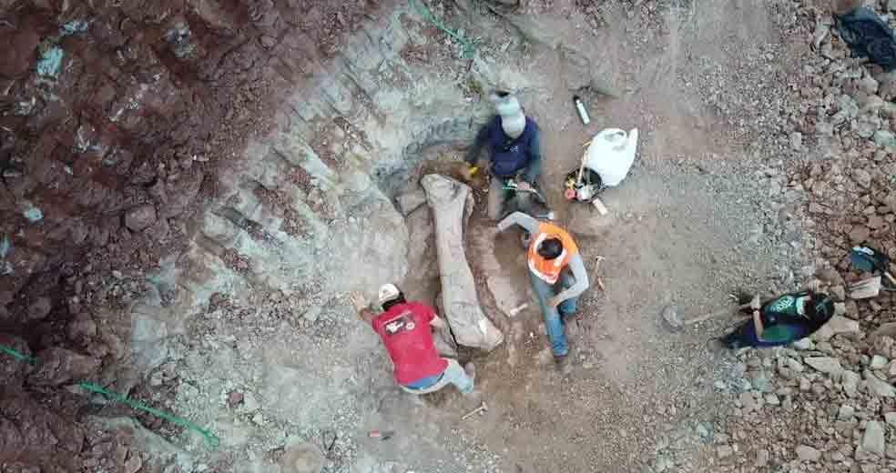Pedaço de osso de dinossauro encontrado em Davinópolis, no Maranhão — Foto: Divulgação/Brado
